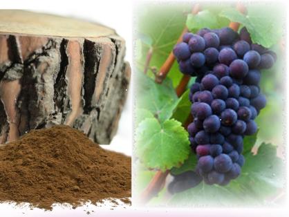 オリゴメリックプロアントシアニジン(OPC)の由来は松樹皮とブドウ種子
