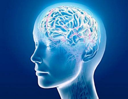 ピクノジェノールの認知機能への効果・効能